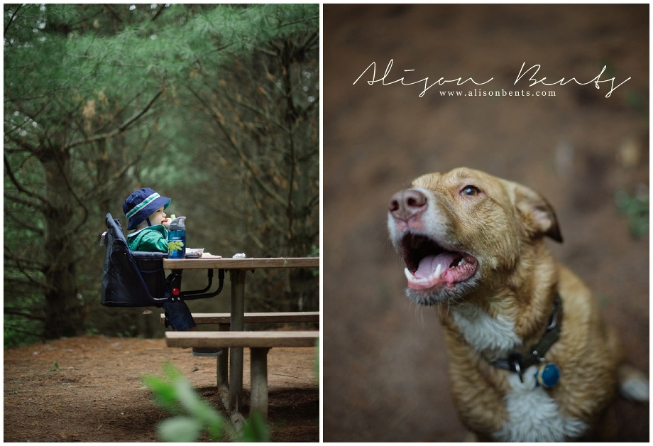 boy in seat at picnic table among pines and wet dog panting
